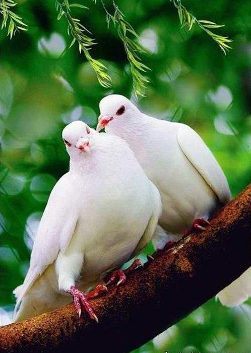 Что является символом любви