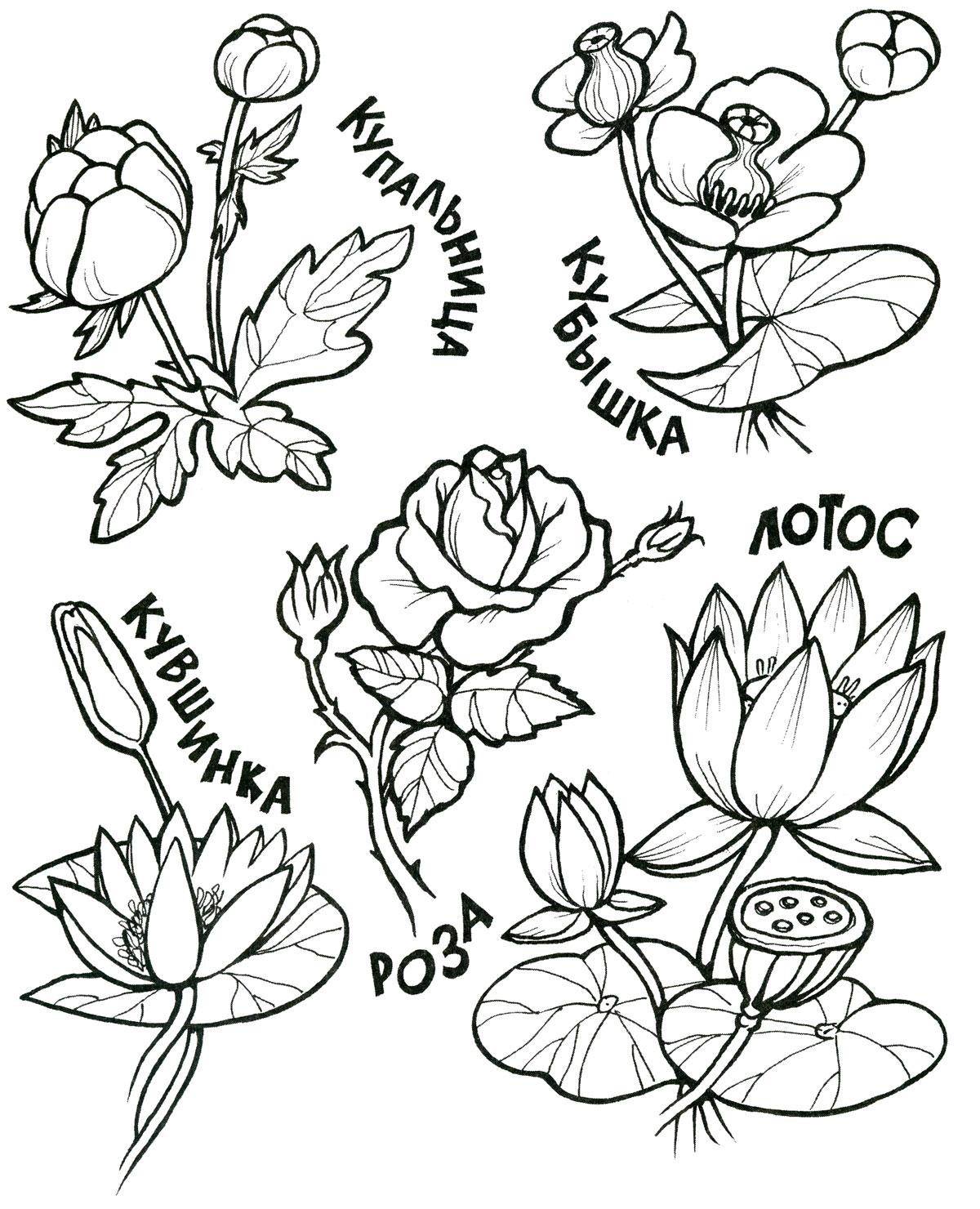 Цветы. Раскраска
