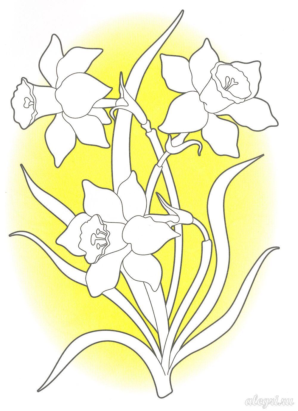 Раскраски для детей от 5 лет. Нарцисс