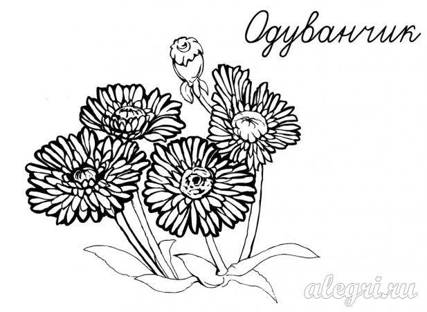 Весенние цветы. Одуванчики. Раскраска