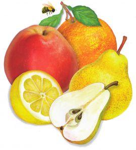 Картинки по запросу картинка фрукты для детей