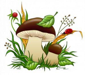 грибы занятие в подготовительной группе